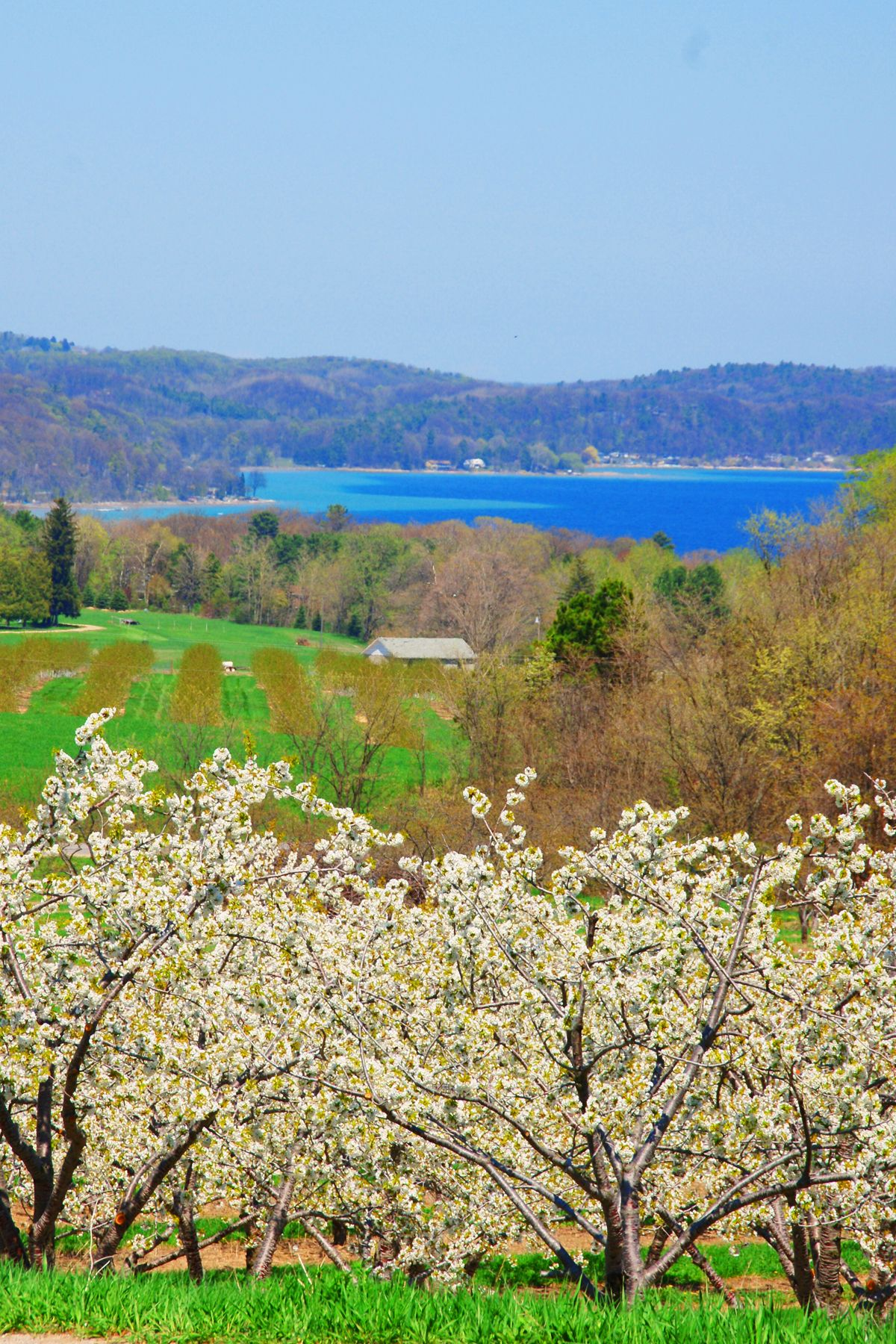 View Of East Grand Traverse Bay Over Stunning Cherry Blossoms During Spring In Traverse City Michigan Traverse City Wine Tour Traverse City Wine Tour