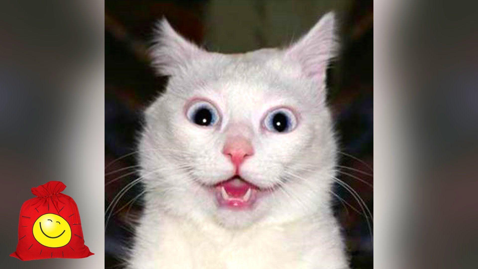 Поздравлениями мужу, картинки смешные видео про кошек до слез