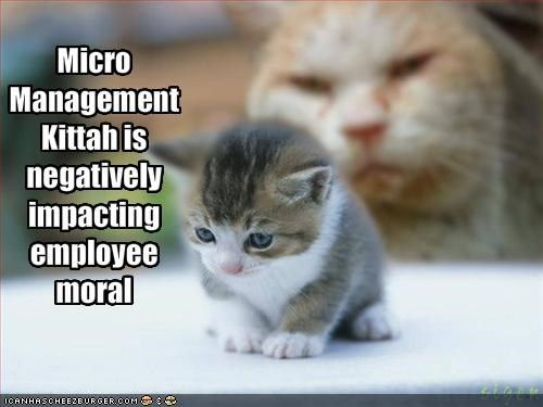 Micromanagement Kittah. I Want To Go Back To Work, Just So