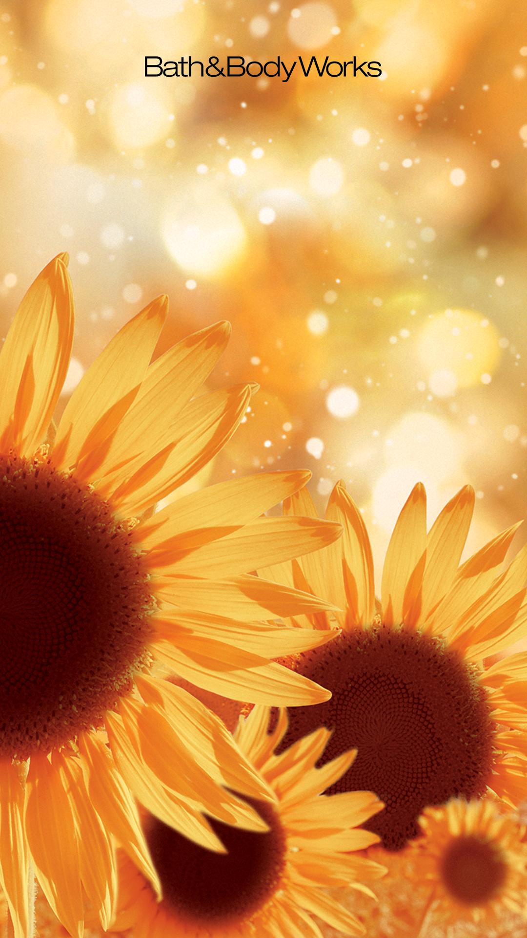 New Golden Sunflower Wallpapers In 2020 Sunflower Wallpaper Hd Flower Wallpaper Wallpaper