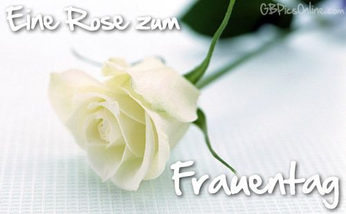 Frauentag gstebuch bilder 006g gb pics humor pinterest white rose flower meaningwhite rose flower white rose symbolic white flowers white rose meaning without vibrant color to upstage it mightylinksfo