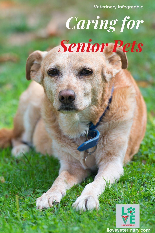 Caring For Senior Pets I Love Veterinary Pets Vet Assistant