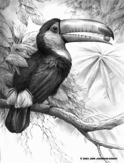 Toco Toucan Bird Pencil Case