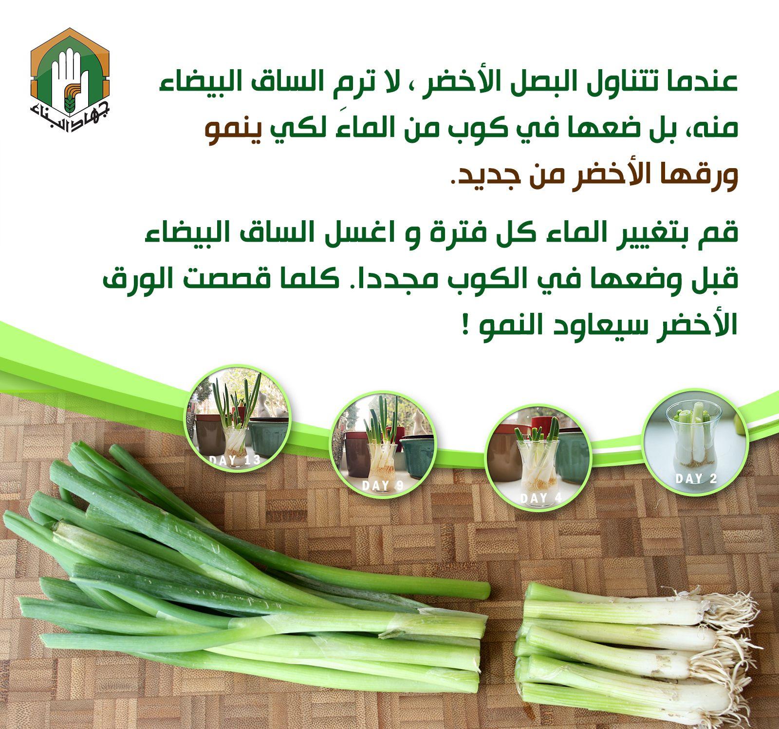 إعادة زراعة البصل الأخضر Plants Vegetables Garden Design