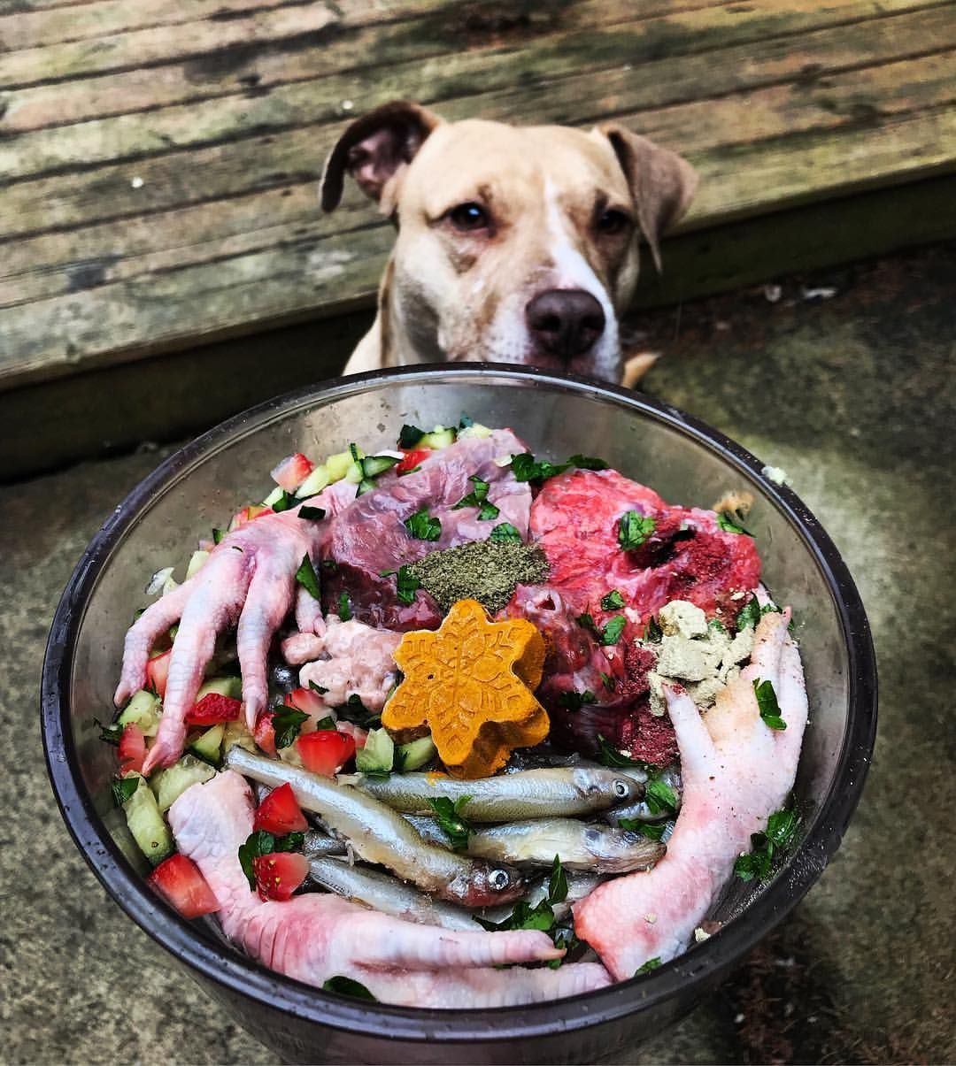 Raw Dog Food Diet Image By X On Bully Baby Raw Dog Food Recipes