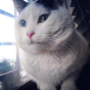 Imagen por Ana Maria Muñoz Parraa<br/>Mi gato regalon  Ichigo  es mi compañero lo amo mucho