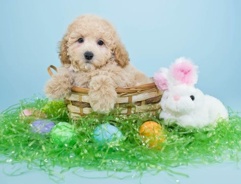 Doggie Do S And Dont S On Easter Cute Dogs And Puppies Doggy Easter Family Pictures