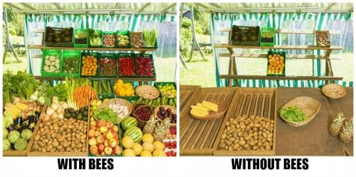 save the bees - I know which table I'd rather dine at! Help us. Get a small hive, don't use pesticides, plant bee friendly flowers. Http://www.mahakobees.com/store.html