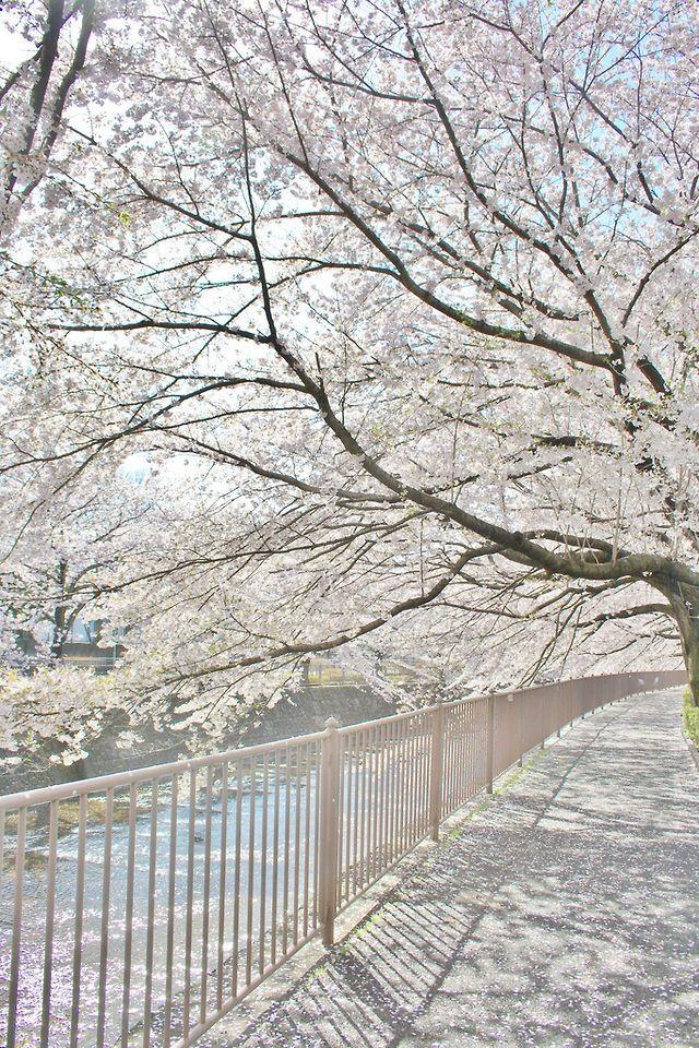 Winter Tree Beautiful Spring Landscape Winter Scenes Winter Wonderland Wallpaper