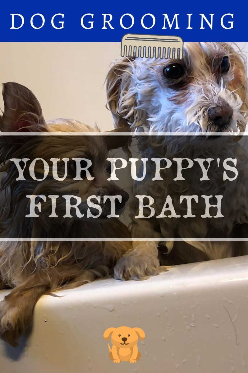 Dog Grooming Tips – 3 Great Ideas For Grooming Your Dog