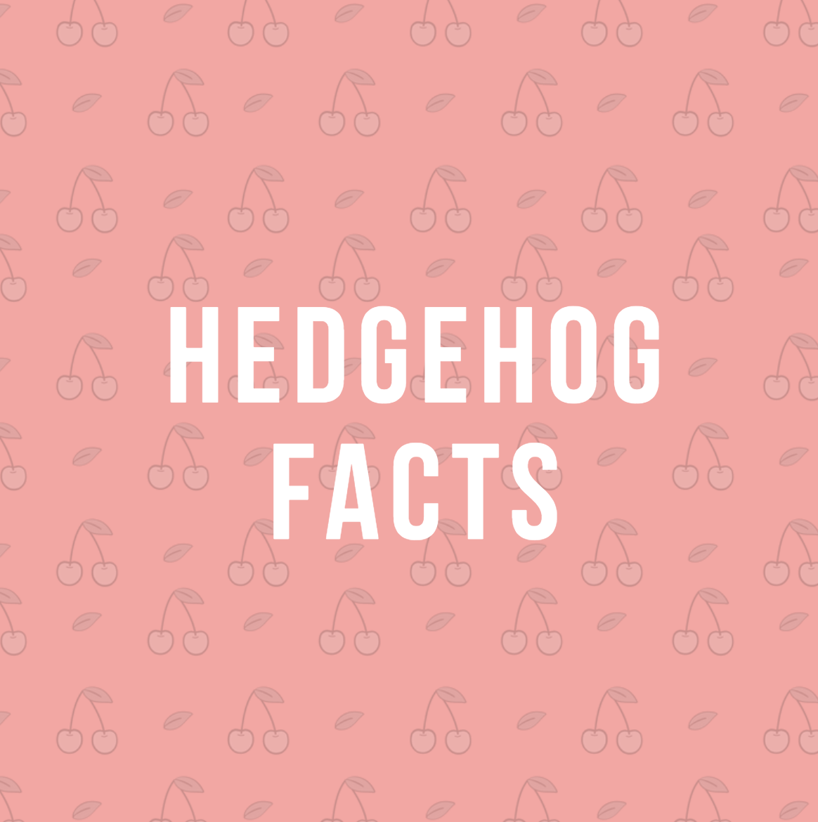 This Is A Board On Hedgehog Facts And How To Take Care Of