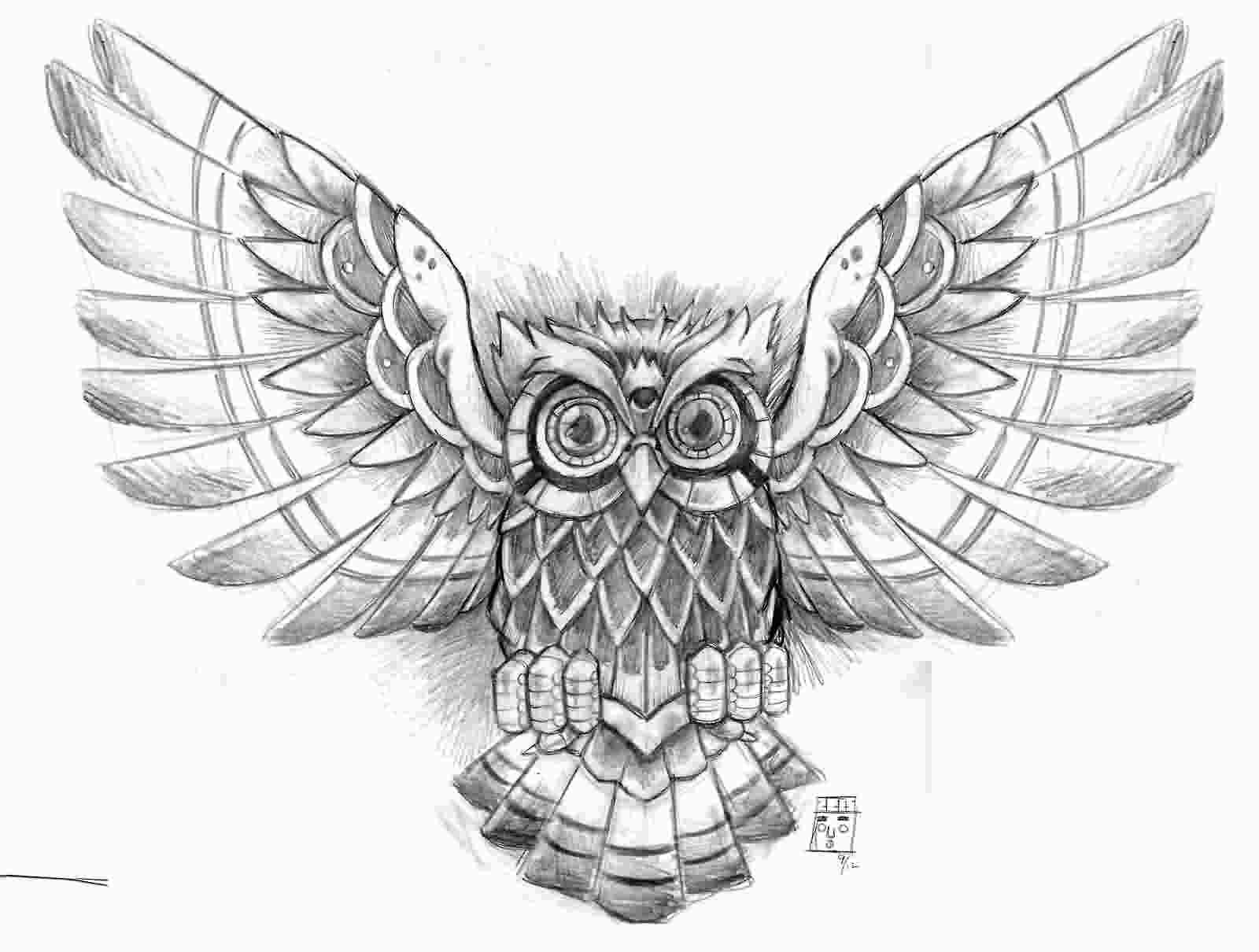 how to draw an owl with wings open