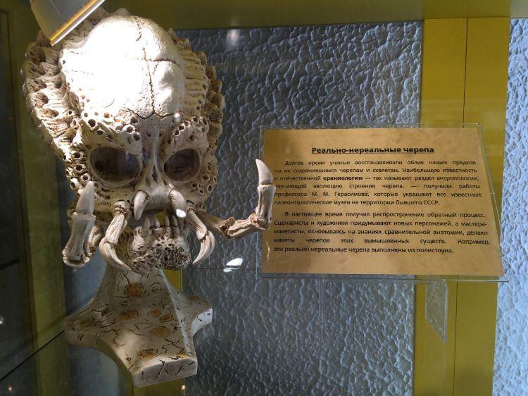 Череп хищника из Музея черепов и скелетов