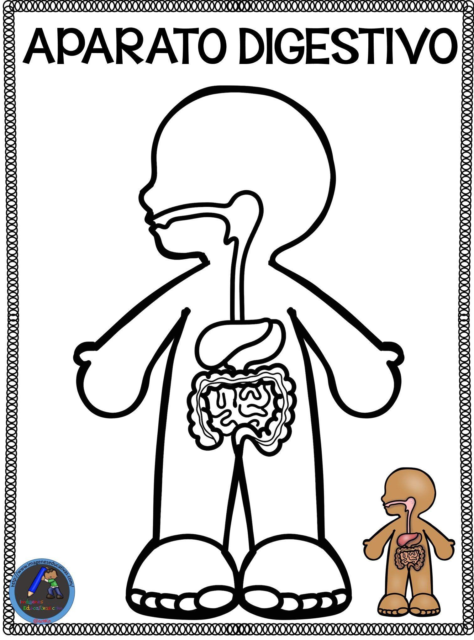 Cuaderno del Cuerpo Humano para colorear | Aparatos del cuerpo humano,  Sistemas del cuerpo humano, Actividades del cuerpo humano
