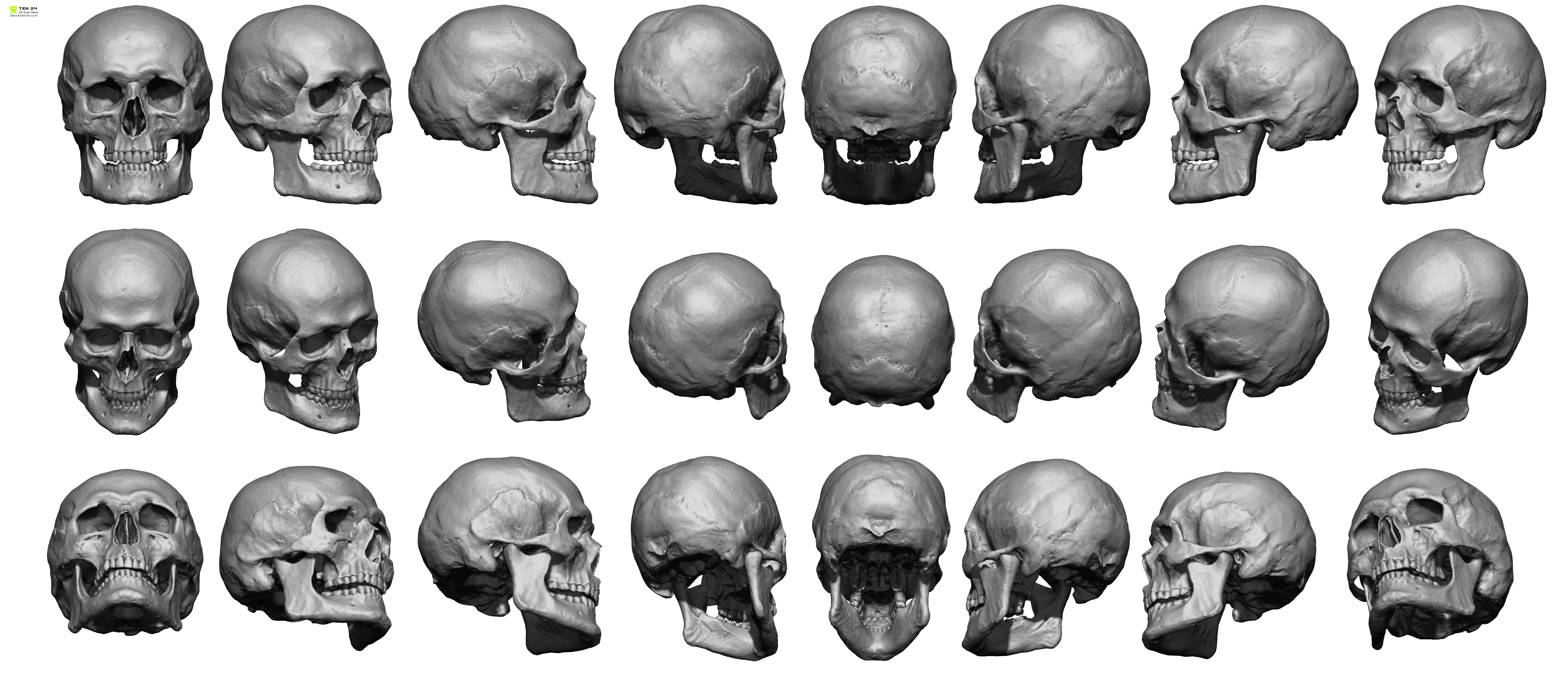 anatomy skull tutorial drawing - Google Search | Anatomy | Pinterest ...
