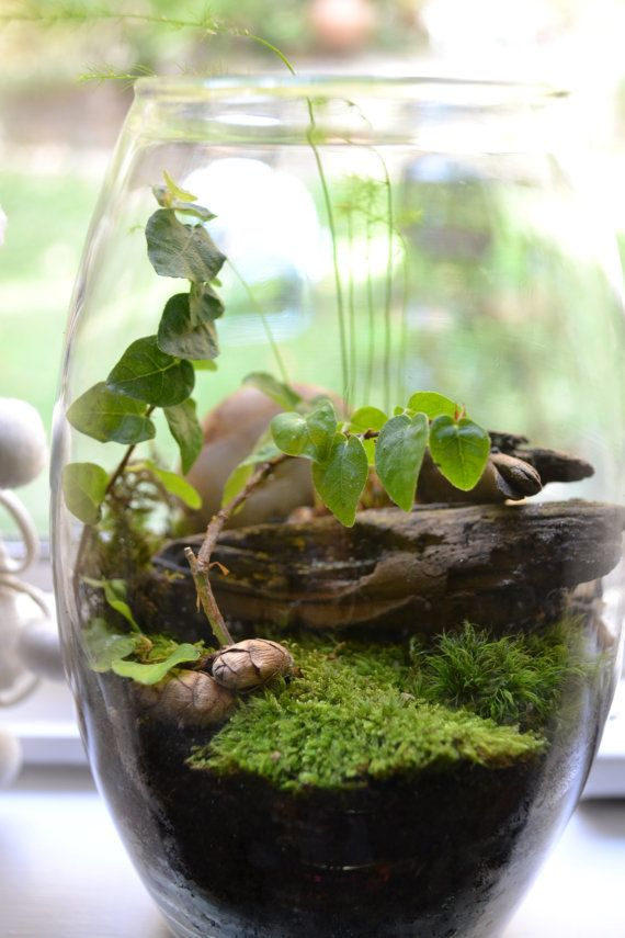 This open jar terrarium stands approx. 7 tall and 4 wide. This self contained eco-system will take very good care of itself, you only need to