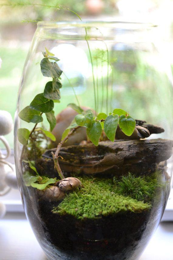 among the trees terrarium home pinterest garten pflanzen und mini garten. Black Bedroom Furniture Sets. Home Design Ideas