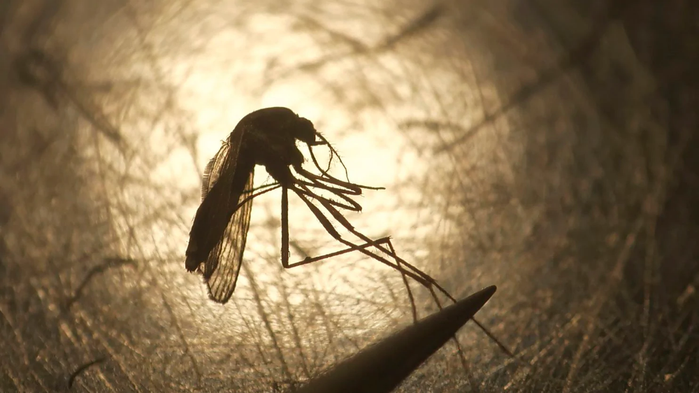 He was 'perfectly healthy' before the mosquito bite. Nine