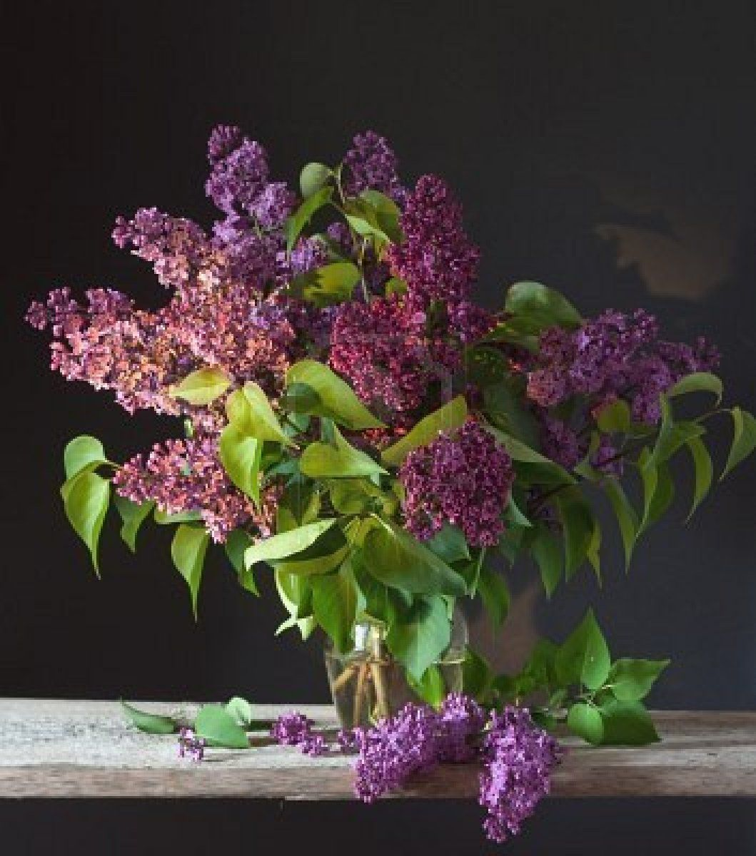 Bouquet Of Spring Purple Lilac In A Vase Still Life Royalty Free Lavender Lilacs Photo Bouquet Purple Lilac Most Beautiful Flowers