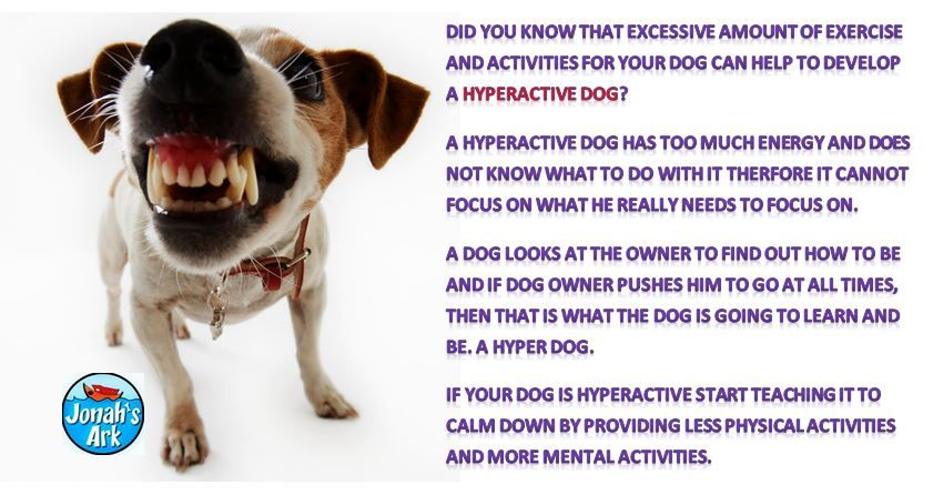 Hyperactive Dogs The Real Reason Why A Dog Is Hyperactive By