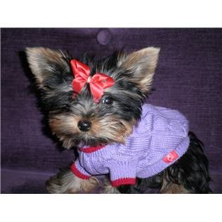 Aww I Want A Yorkie To Dress Up And Carry Around In A Bag Lol But 4real I Do Yorkie Puppy Friends Little Dogs