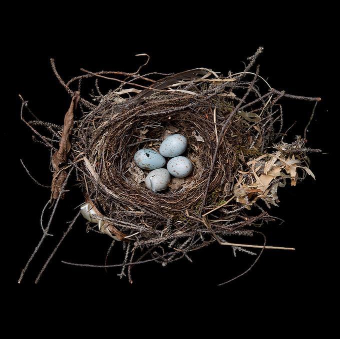 Bird Nests By Sharon Beals Bird Nest Nest Bird