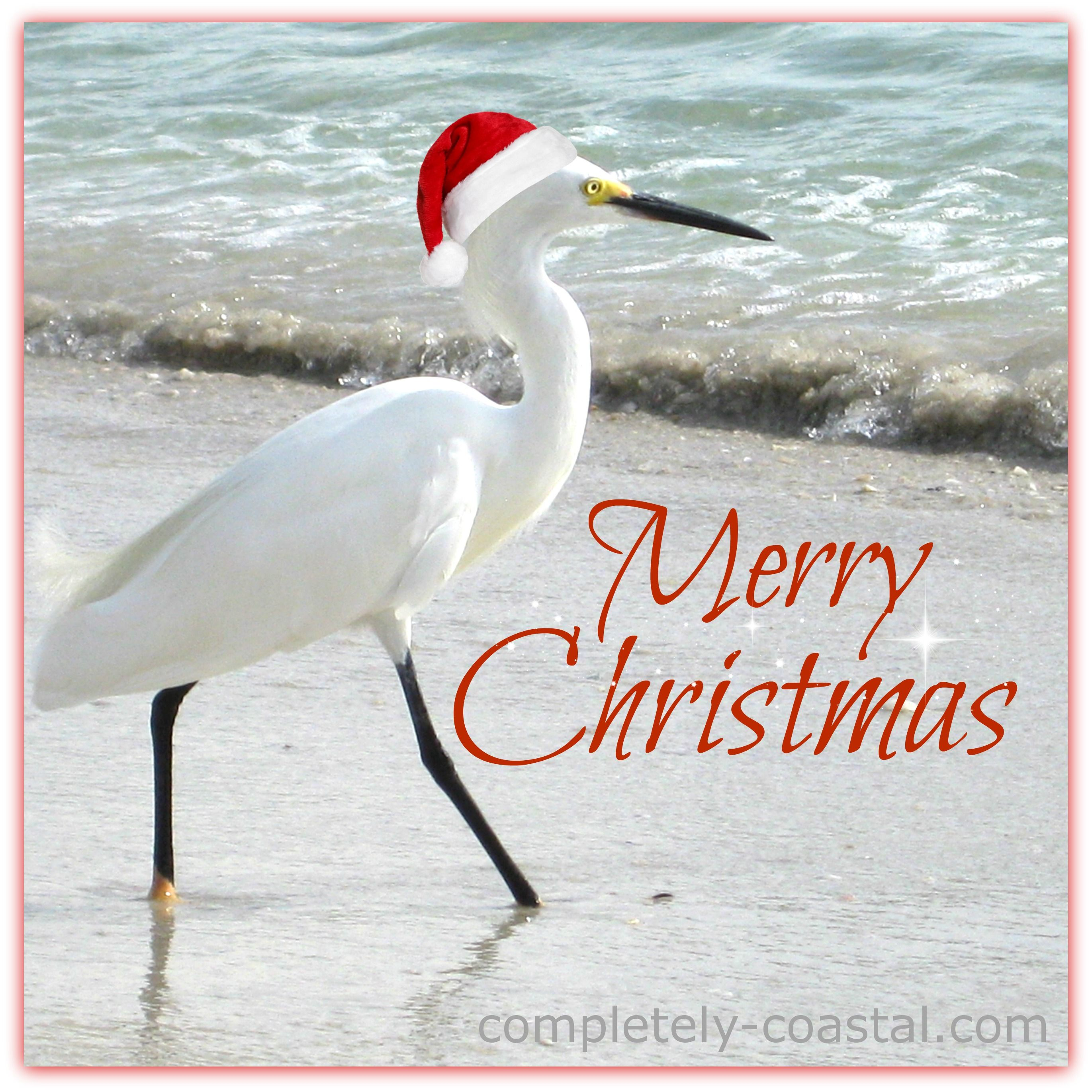 Florida Christmas Egret. Captured In Naples. Merry