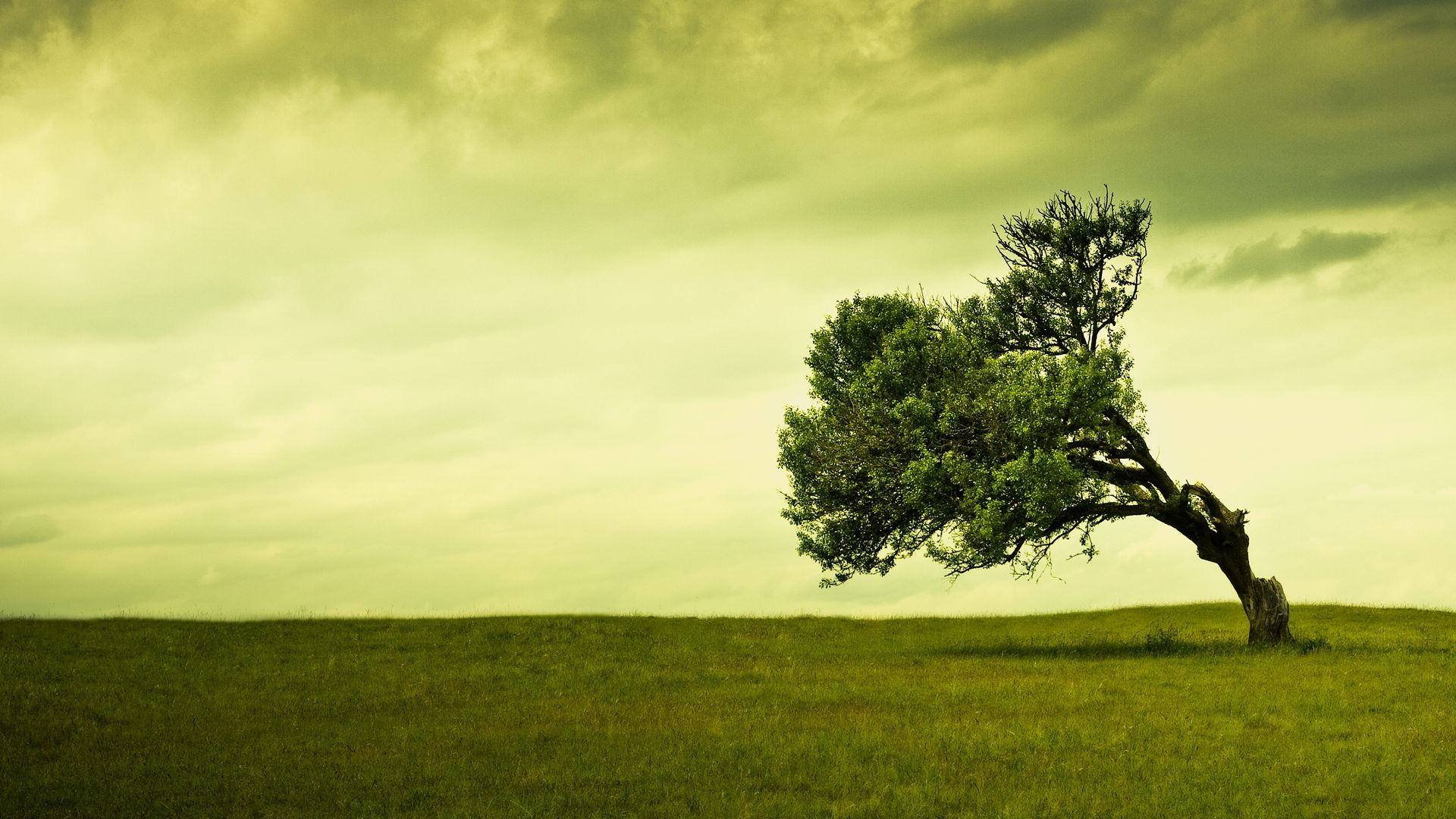 Widescreen abstract backgrounds wallpaper hd 1920x1080 2323 - Tree Bended By The Wind Green Grass Free Hd Wallpaper