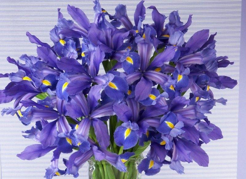 february birth flower iris tattoos february birth