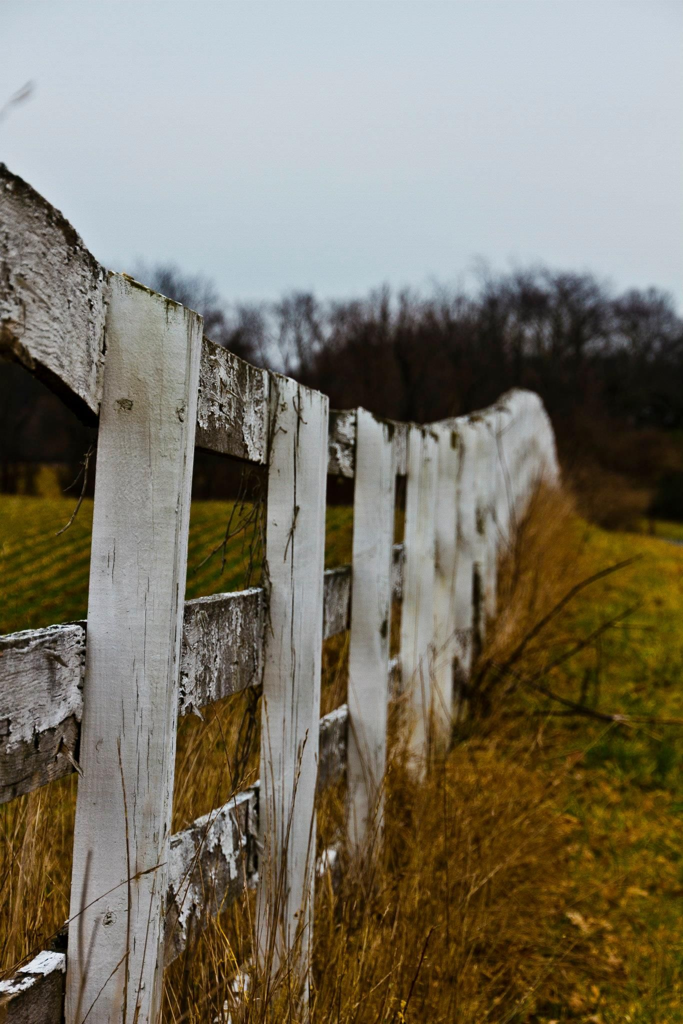 Old White Fence