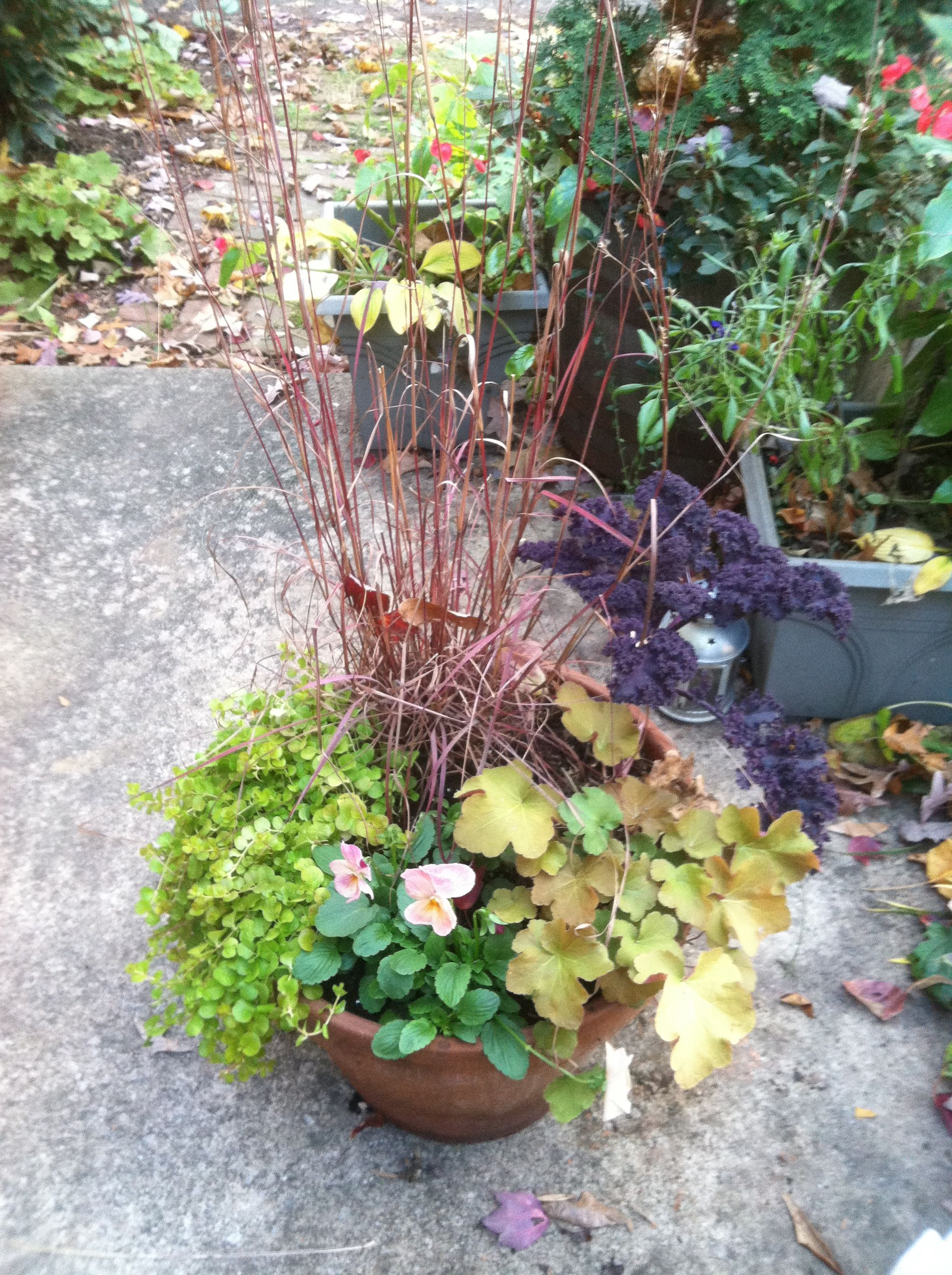 Fall flower pot with some perennials evergreens and annuals fall flower pot with some perennials evergreens and annuals izmirmasajfo