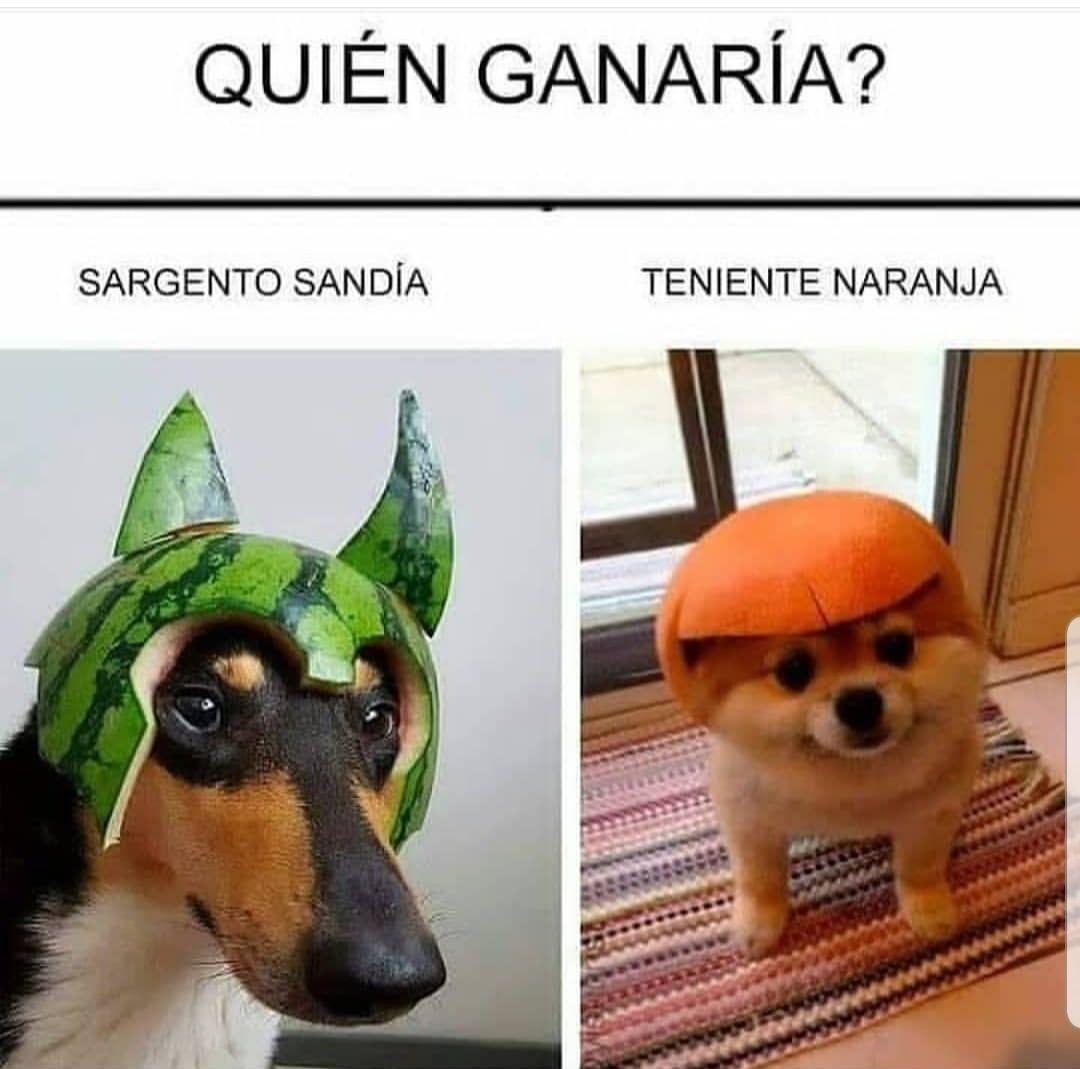Memes Memes De Animales Divertidos Memes De Perros Chistosos Memes Perros