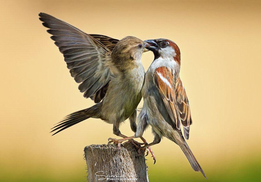 The Kiss By Urs Schmidli Photo 209572067 500px Birds