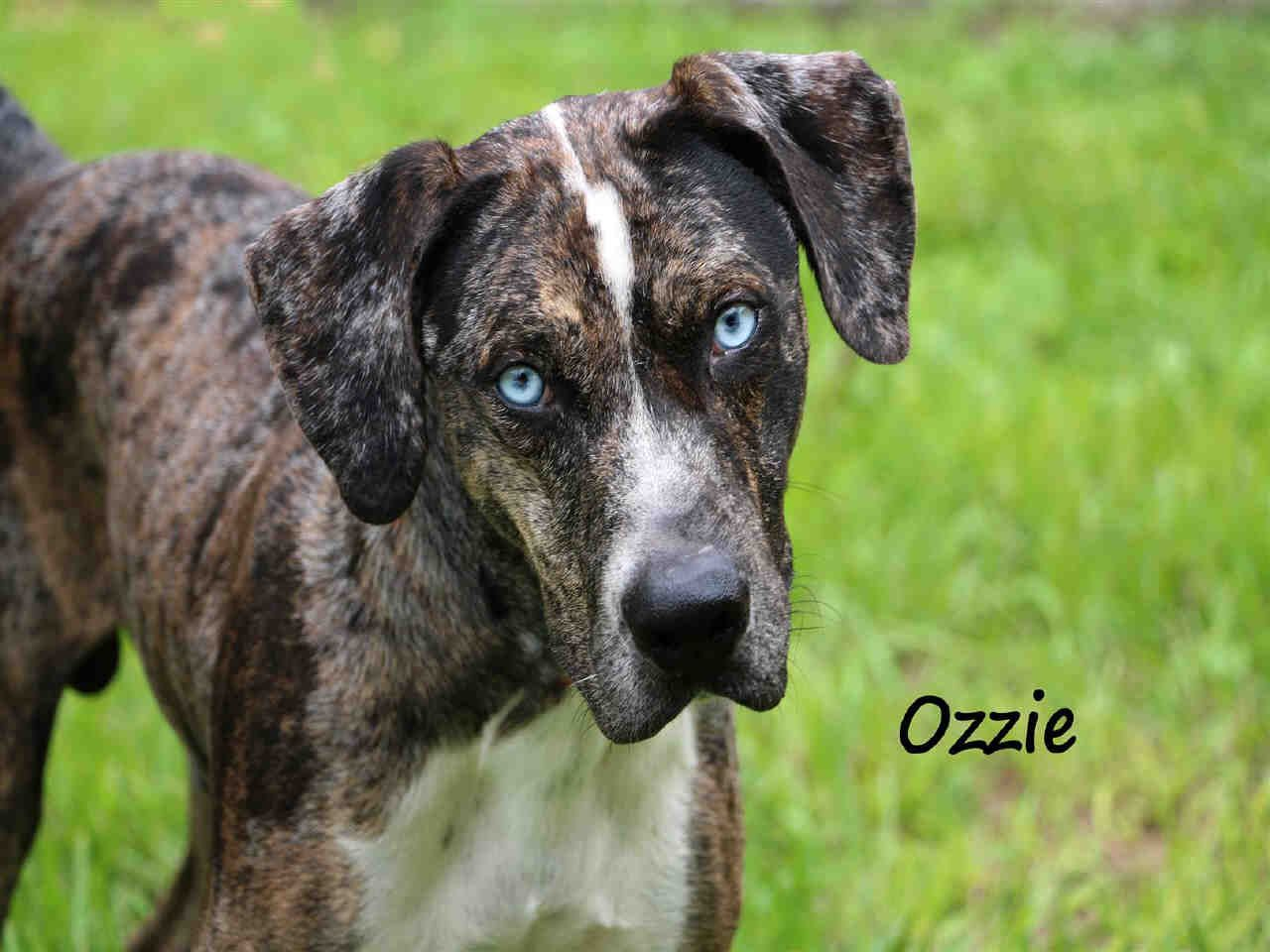 Lee County Domestic Animal Services, FL. at (239) 5337387