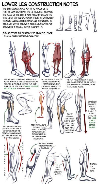 Konstruktion des Unterbeins. Wade Unterschenkel Bein Knie Zeichnen ...