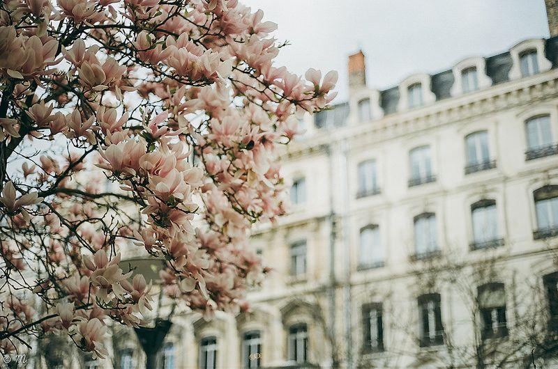 Seasonal tones. | Flickr - Photo Sharing!
