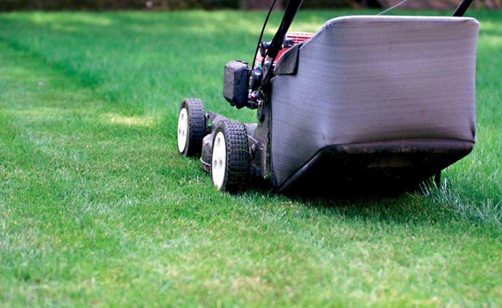 Die Optimale Schnitthohe Beim Rasenmahen Garten Tipps Lawn