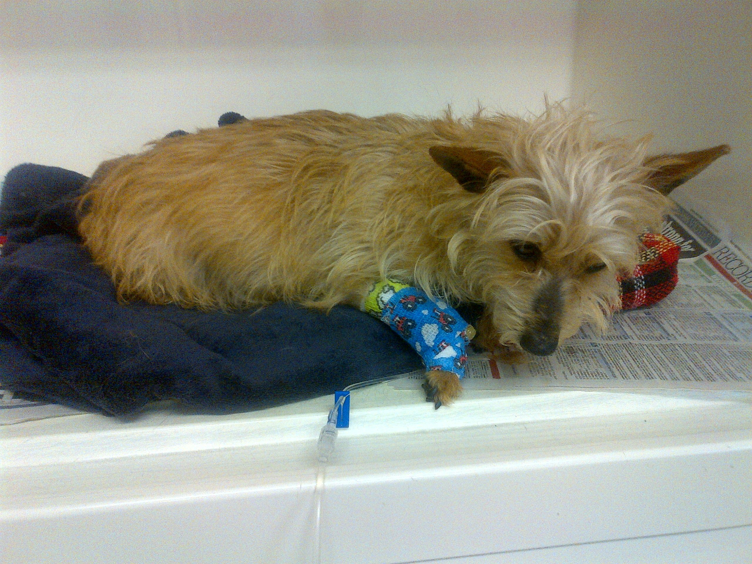 Scotland: Pregnant Dog Tied To A Bin With A Cable Round ...