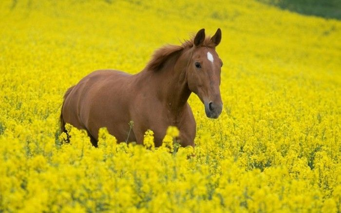 Die Schonsten Pferde Der Welt Schwarzes Tier Ein Bisschen Aggressiv Large Animals Horses Animals