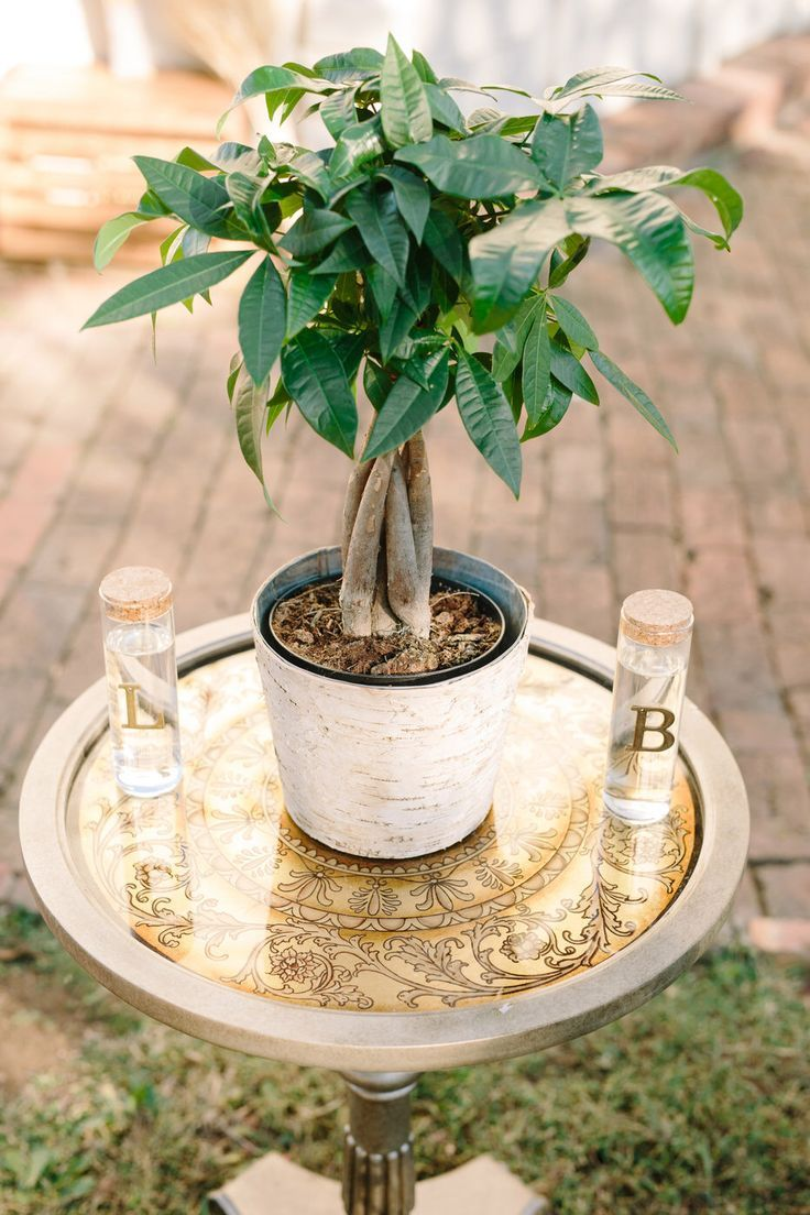 Unity ceremony. Watering of the tree. Fall wedding. This is a cute idea! #ceremonyideas