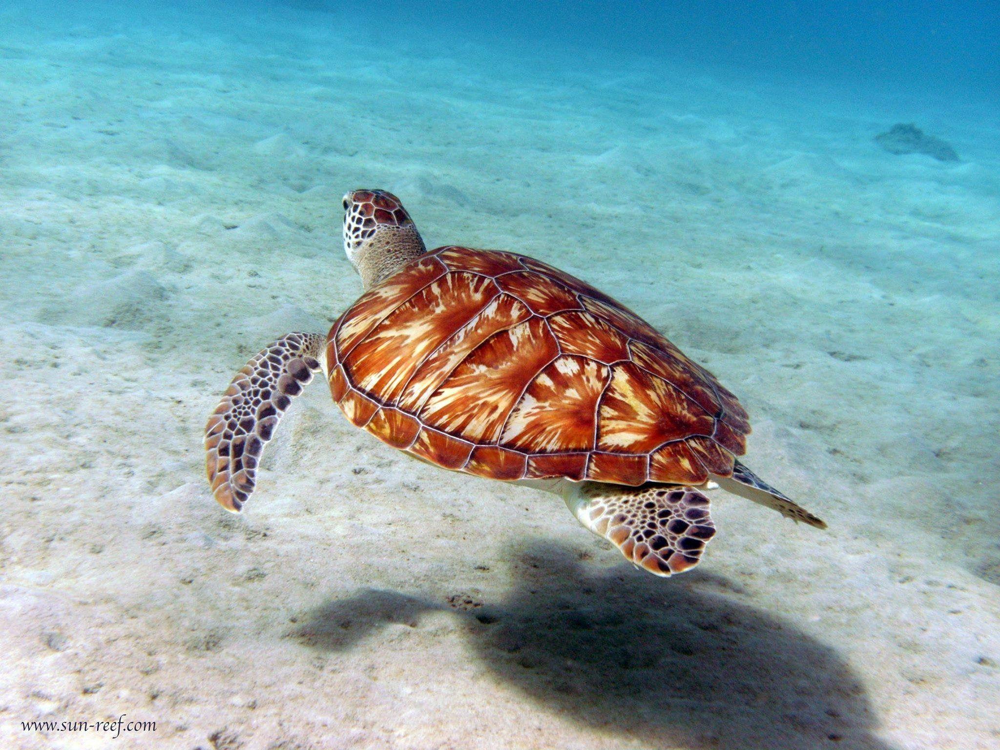 Met Eigen Ogen Schildpadden Zien Tijdens Het Snorkelen Is Echt Een Belevenis Bij O A Klein Curacao Zie Je Ze Zo Onder Je Zwemmen Snorkelen Curacao Dieren