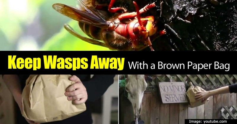 Can You Really Use A Brown Paper Bag To Keep Wasps Away