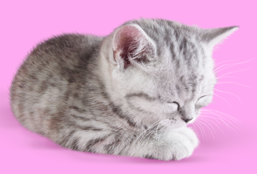 FADING KITTEN SYNDROME WHAT IS IT & WHAT CAN YOU DO