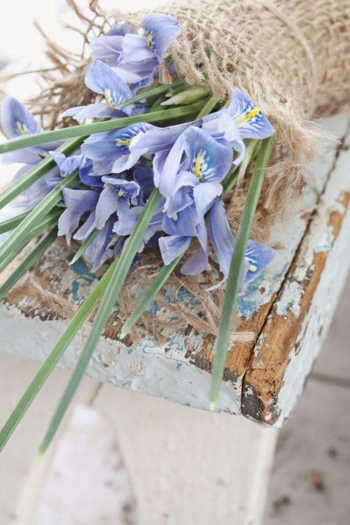 syflove:  blue