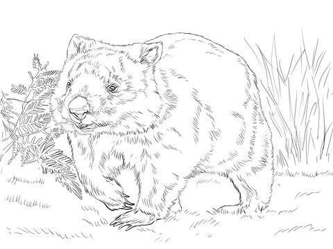 Ausmalbild Gemeiner Wombat Ausmalbilder Kostenlos Zum Ausdrucken Malvorlagen Tiere Wombat Ausmalen