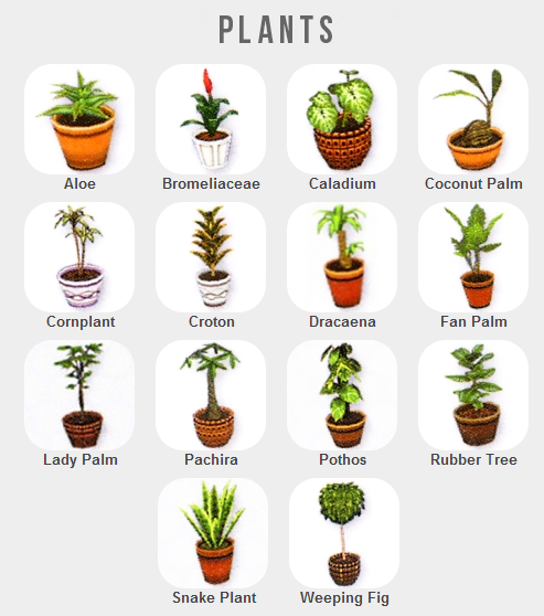 Shattered Earth Acnl Plant Guide Animal Crossing Plants Room With Plants