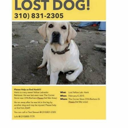 2000 reward for lost yellow labrador retriever (san pedro