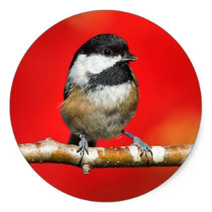 Cute black capped chickadee with red autumn leaves classic round sticker