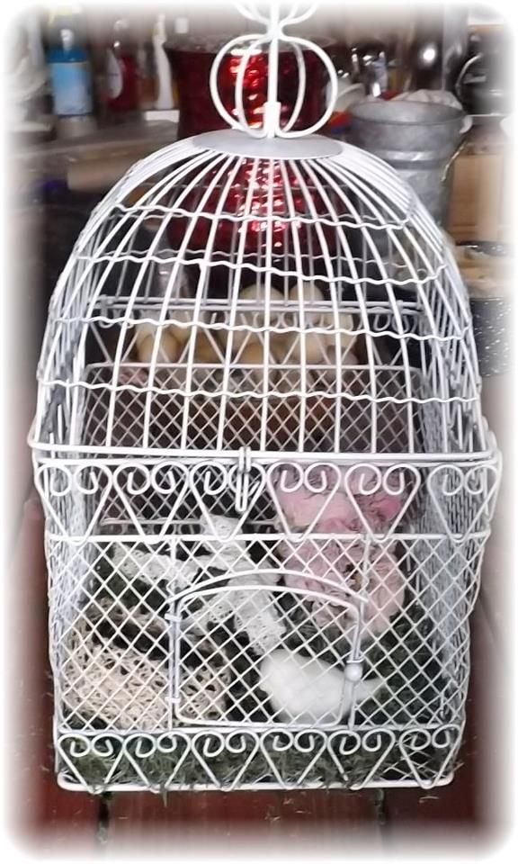 Country Birdcage Giveaway  http://vintagecountryfarmhouse.blogspot.com/#