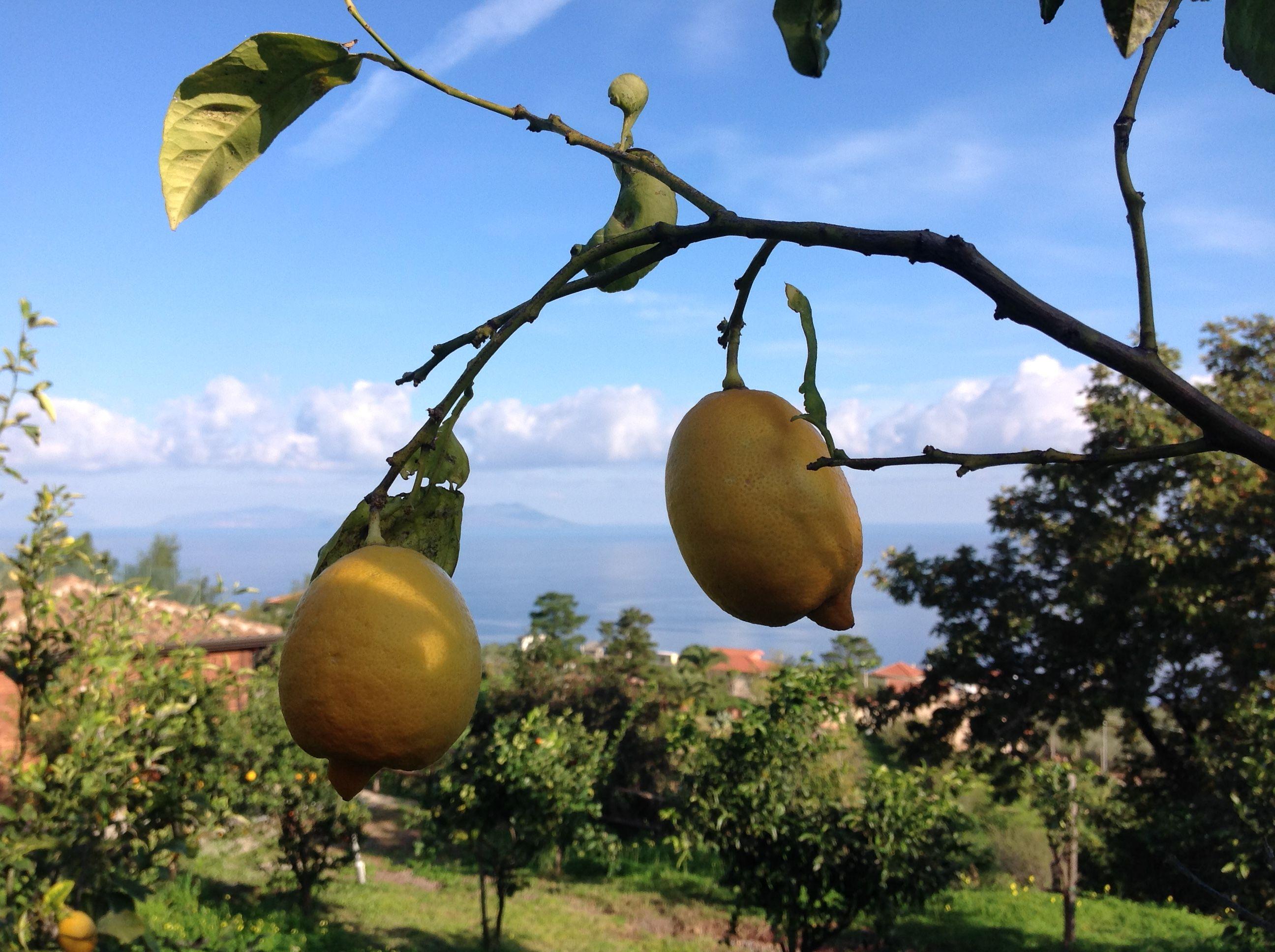 Salute E Bellezza Agrumi Di Sicilia Gusto Per Il Palato Energia